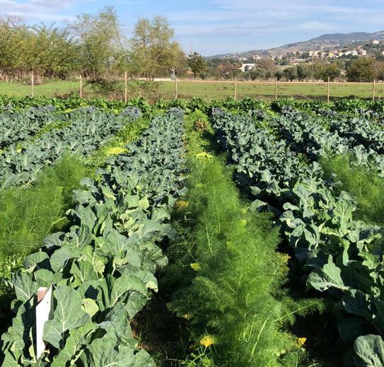 Famiglie-campo-orto-coltivato-affitto-condiviso-fattoria-didattica-animagricola