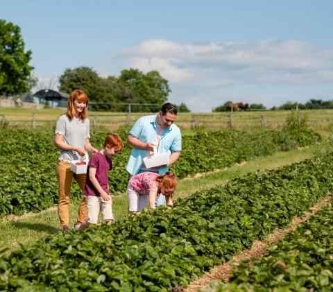 famiglia-raccolta-frutta-verdura-campo-bio-naturale-fattoria-animagricola