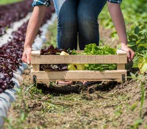 raccolta-frutta-verdura-stagione-bio-naturale-online-domicilio-fattoria-didattica-animagricola