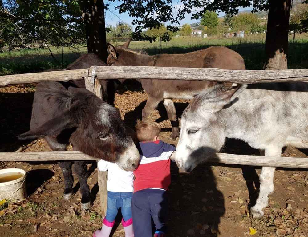 bambini-asini-animagricola-fattoria-didattica-asineria