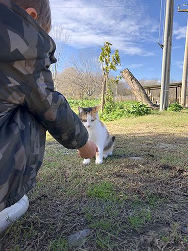 bambino-e-gatto-pomeriggi-in-fattoria-animagricola